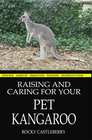 Raising Pet Kangaroos